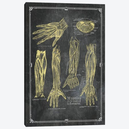 Muscles Of The Arm And Hand In Yellow Chalk Canvas Print #CSM25} by ChartSmartDecor Canvas Art