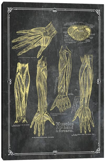 Muscles Of The Arm And Hand In Yellow Chalk Canvas Art Print