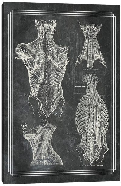 Muscles Of The Back And Neck I Canvas Art Print