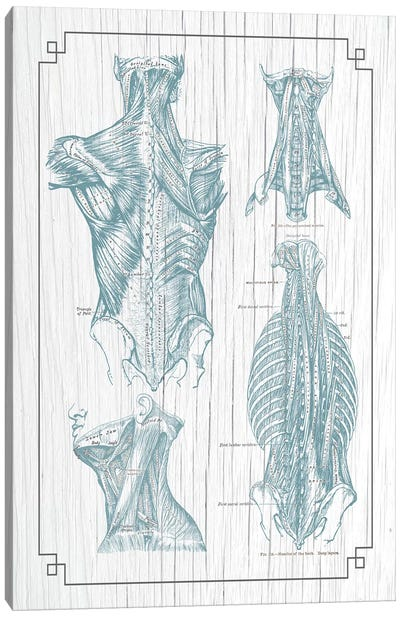 Muscles Of The Back And Neck III Canvas Art Print