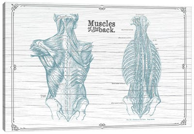 Muscles Of The Back Horizontal Canvas Art Print