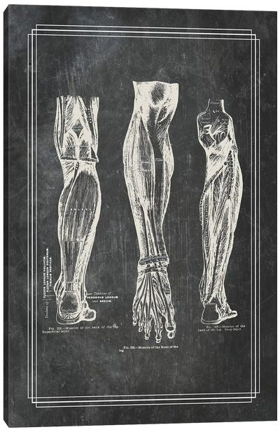 Muscles Of The Calf Canvas Art Print