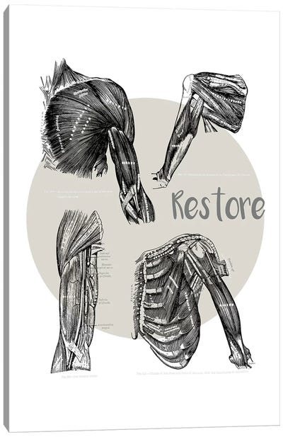 Muscles Of The Chest And Shoulder Restore Canvas Art Print