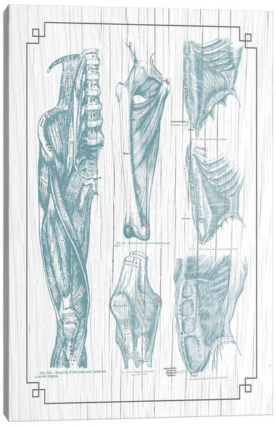 Muscles Of The Core Leg Thigh And Knee Canvas Art Print