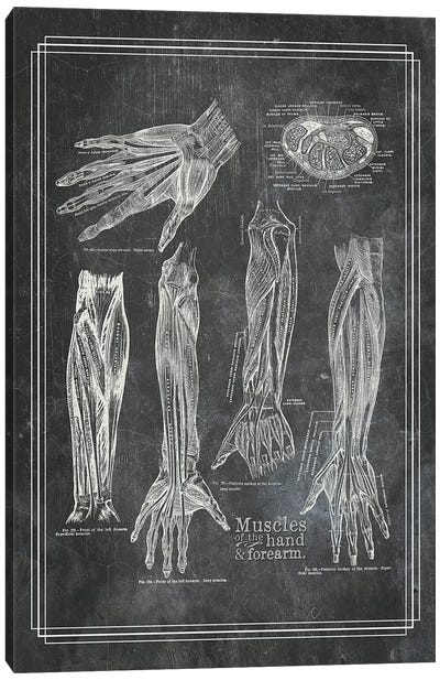 Muscles Of The Forearm And Hand Canvas Art Print