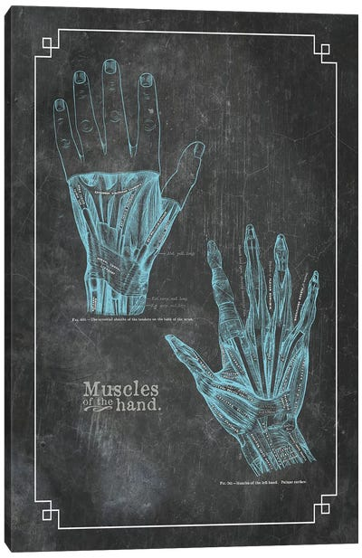 Muscles Of The Hand Canvas Art Print