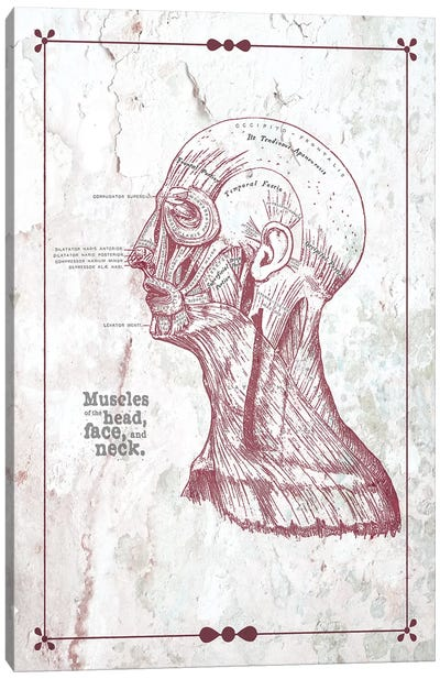 Muscles Of The Head Face And Neck Canvas Art Print