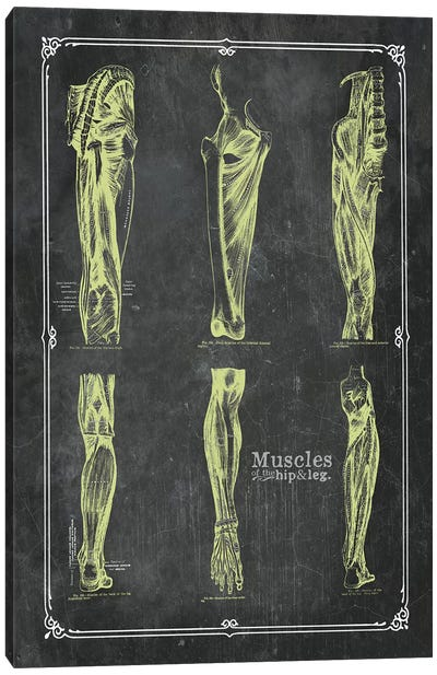 Muscles Of The Hip And Leg Canvas Art Print