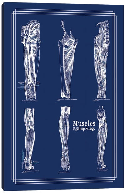 Muscles Of The Leg And Hip Canvas Art Print