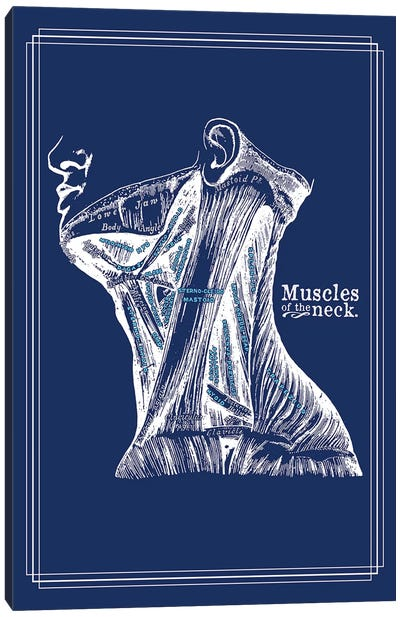 Muscles Of The Neck Canvas Art Print