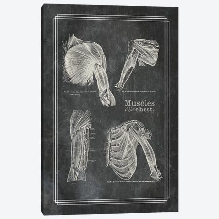 Muscles Of The Shoulder Canvas Print #CSM46} by ChartSmartDecor Canvas Wall Art
