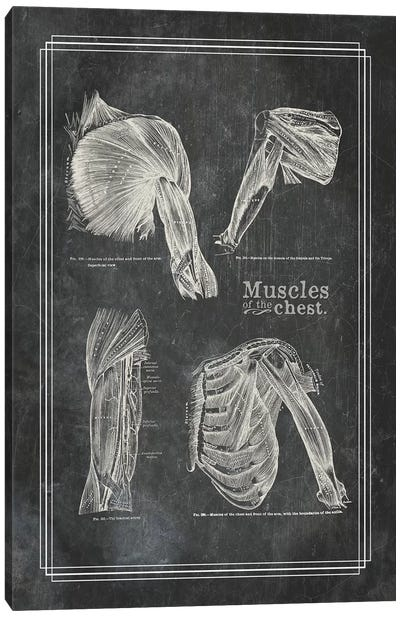 Muscles Of The Shoulder Canvas Art Print