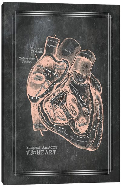 Surgical Anatomy Of The Heart Canvas Art Print