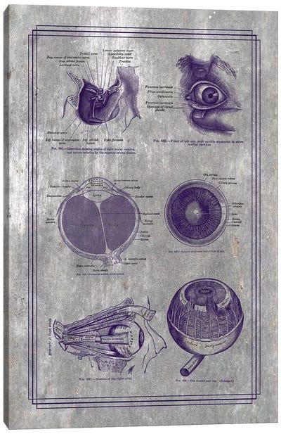 Anatomy Of The Eyeball And Orbital Structures Canvas Art Print