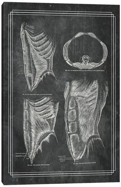 The Abdominal Wall Canvas Art Print