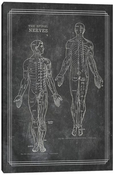 The Spinal Nerves Canvas Art Print