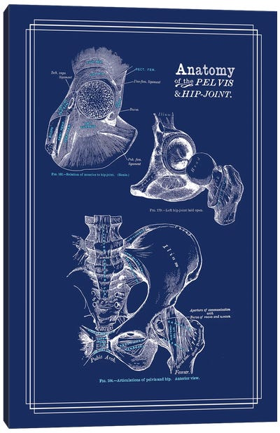 Anatomy Of The Hip Joint Canvas Art Print