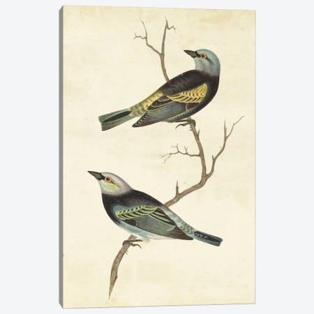 Blue-Headed Tanager Canvas Print #CSN1} by Cassin Canvas Art