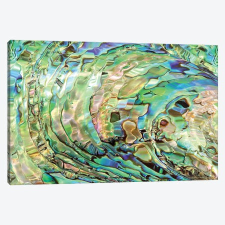 Abalone Canvas Print #CTB2} by Christopher Brown Art Print