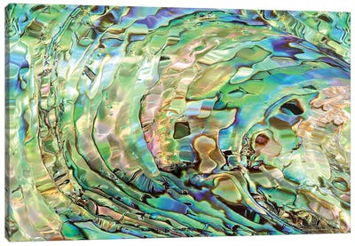 Abalone Canvas Art Print