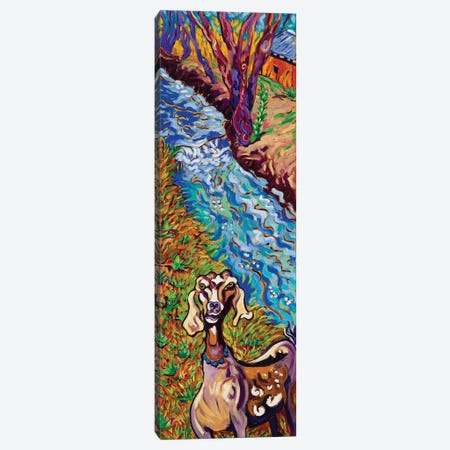 Acequia Goat Canvas Print #CTC1} by Cathy Carey Canvas Wall Art