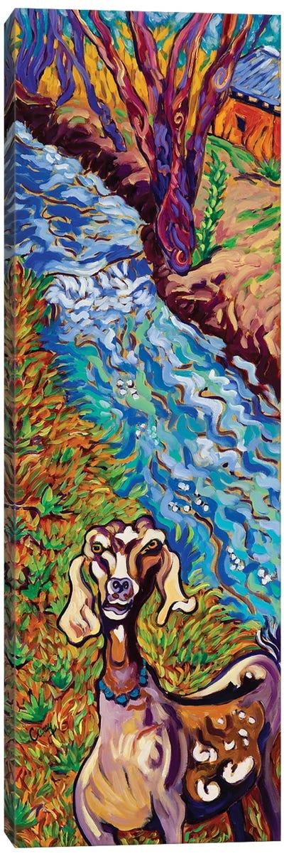 Acequia Goat Canvas Art Print