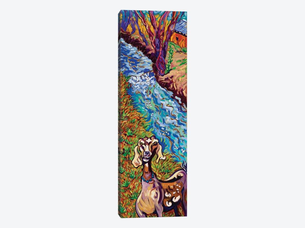 Acequia Goat by Cathy Carey 1-piece Canvas Print