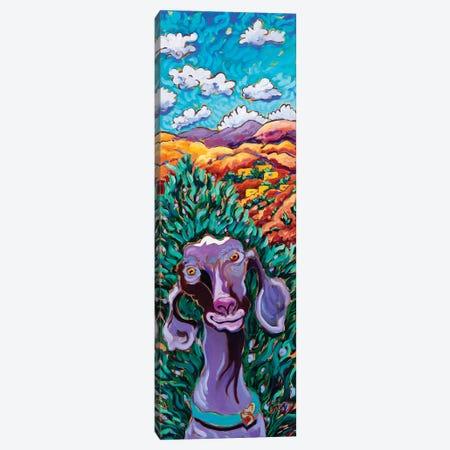 Adobe Goat Canvas Print #CTC2} by Cathy Carey Canvas Art