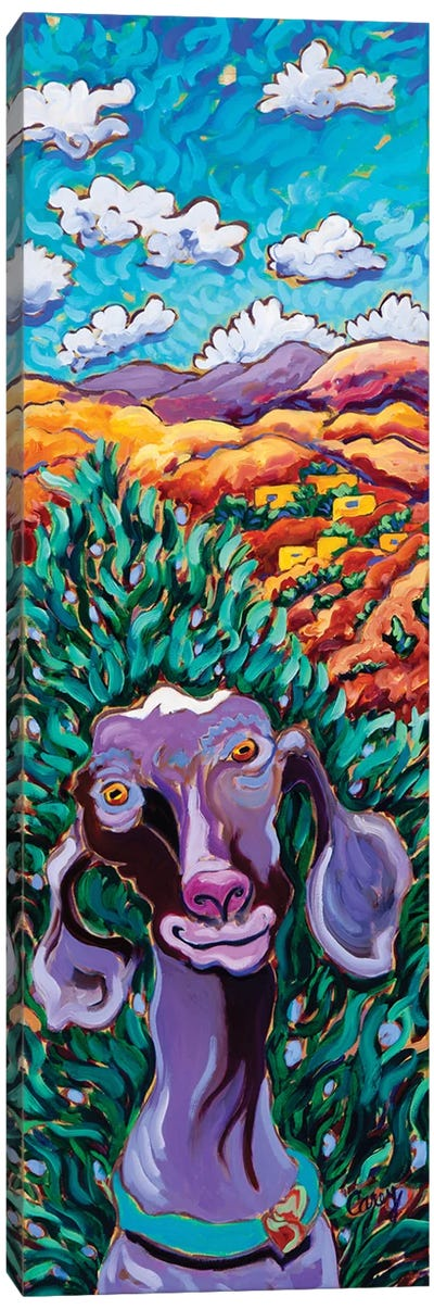 Adobe Goat Canvas Art Print