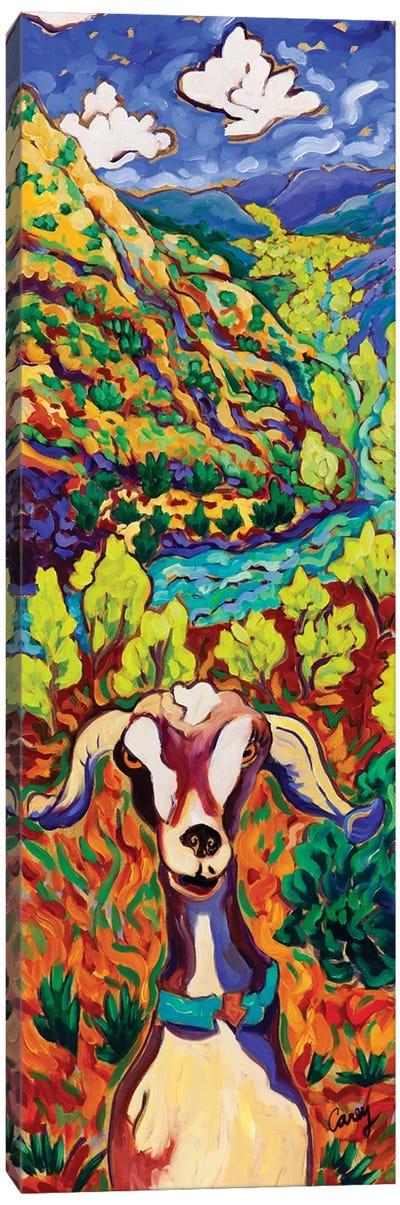 Cottonwood Goat Canvas Art Print
