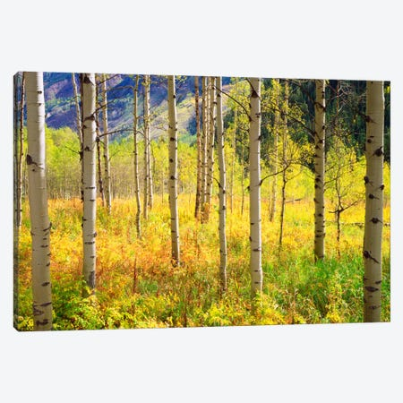 Autumn Landscape, Rocky Mountains, Colorado, USA Canvas Print #CTF14} by Christopher Talbot Frank Canvas Print