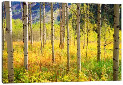 Autumn Landscape, Rocky Mountains, Colorado, USA Canvas Art Print