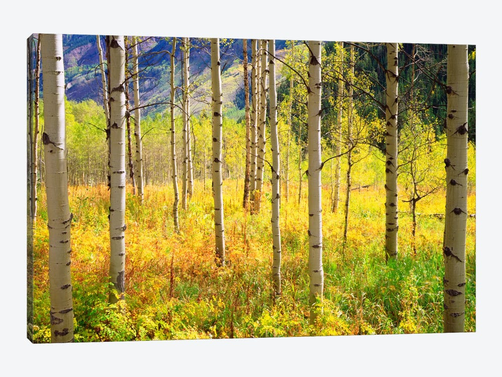 Autumn Landscape, Rocky Mountains, Colorado, USA by Christopher Talbot Frank 1-piece Canvas Artwork