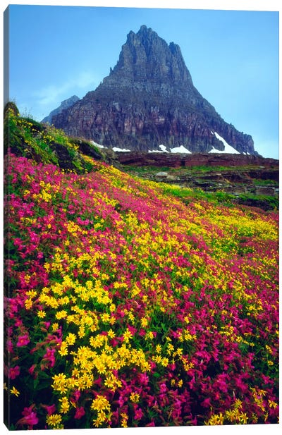 Summer Landscape, Glacier National Park, Montana, USA Canvas Art Print