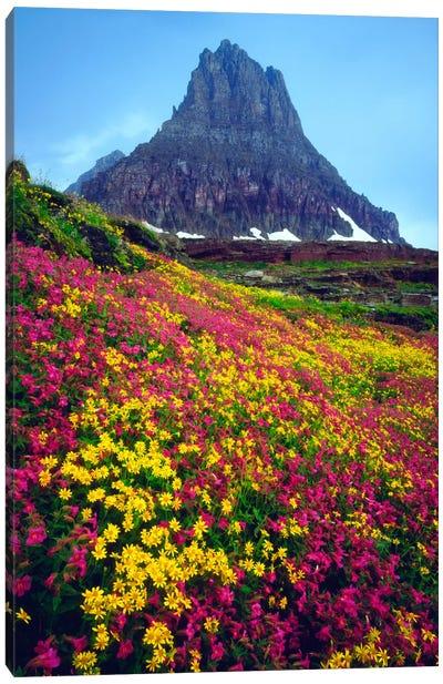 Summer Landscape, Glacier National Park, Montana, USA Canvas Art Print