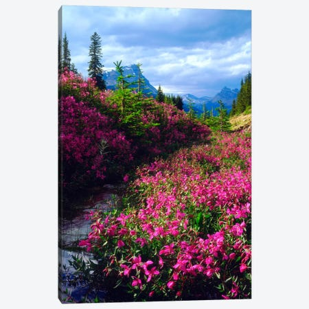 Wildflowers, Banff National Park, Alberta, Canada Canvas Print #CTF3} by Christopher Talbot Frank Canvas Print
