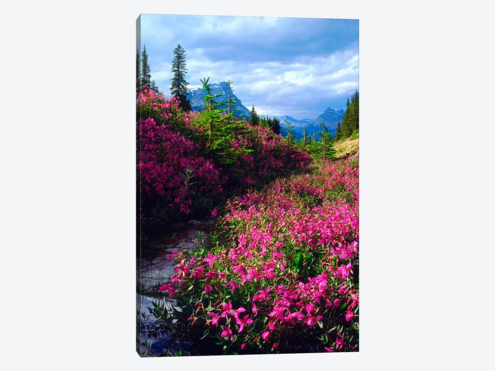 Wildflowers, Banff National Park, Alberta, Canada by Christopher Talbot Frank 1-piece Canvas Artwork