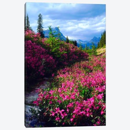 Wildflowers, Banff National Park, Alberta, Canada Canvas Print #CTF3} by Christopher Talbot Frank Canvas Print