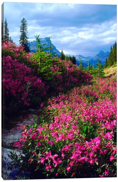 Wildflowers, Banff National Park, Alberta, Canada Canvas Art Print