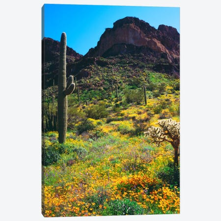 American Southwest Landscape, Organ Pipe Cactus National Monument, Pima County, Arizona, USA Canvas Print #CTF6} by Christopher Talbot Frank Canvas Art