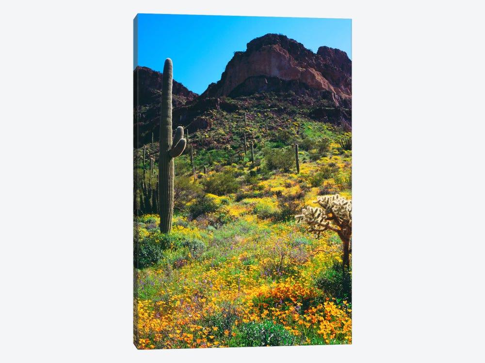 American Southwest Landscape, Organ Pipe Cactus National Monument, Pima County, Arizona, USA by Christopher Talbot Frank 1-piece Art Print