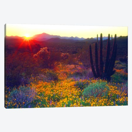 Sunset Over An American Southwest Landscape, Organ Pipe National Monument, Pima County, Arizona, USA Canvas Print #CTF7} by Christopher Talbot Frank Canvas Art