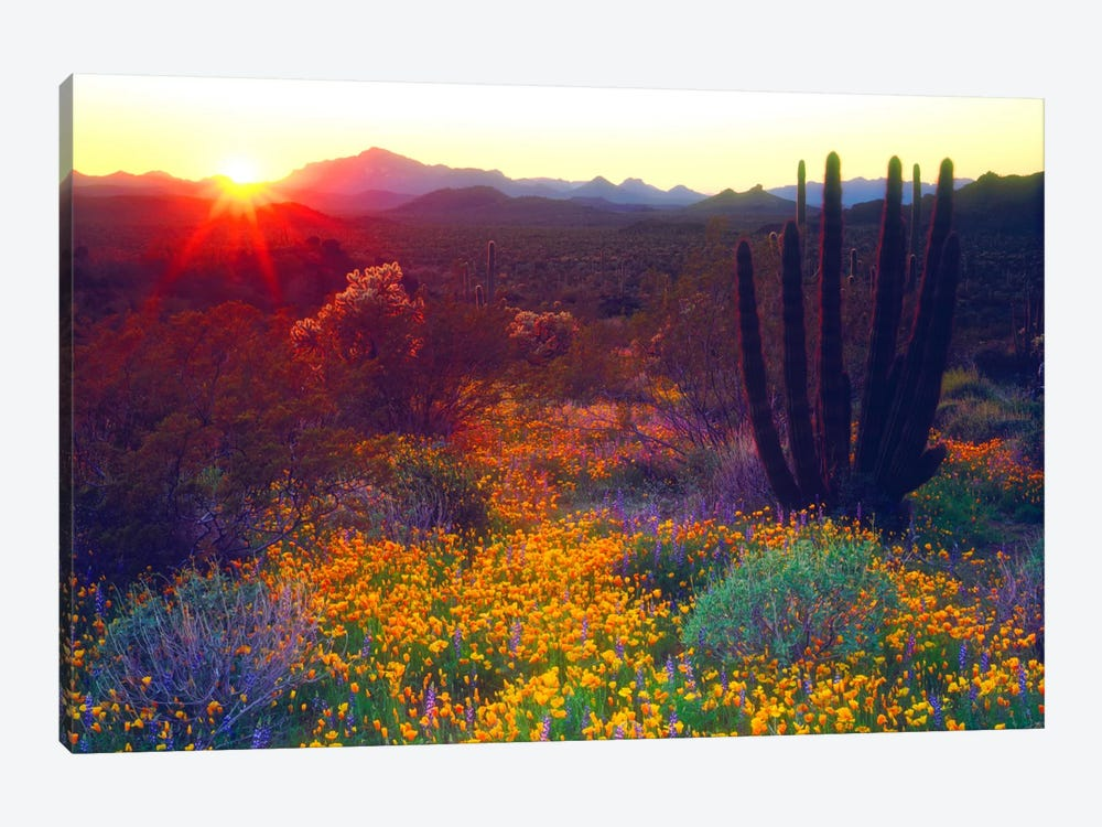 Sunset Over An American Southwest Landscape, Organ Pipe National Monument, Pima County, Arizona, USA by Christopher Talbot Frank 1-piece Canvas Artwork