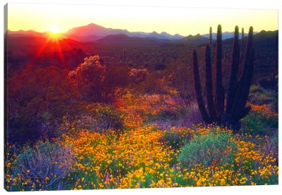 Sunset Over An American Southwest Landscape, Organ Pipe National Monument, Pima County, Arizona, USA Canvas Art Print