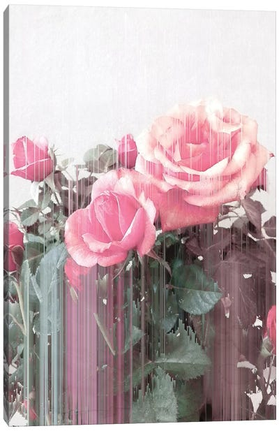Rose All Day Canvas Art Print