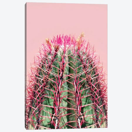 Cactus On Pink Canvas Print #CTI14} by Emanuela Carratoni Canvas Wall Art