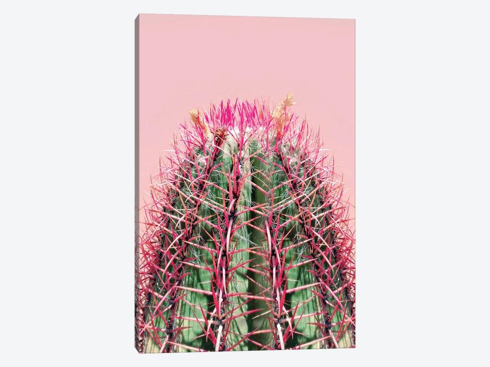 Cactus On Pink by Emanuela Carratoni 1-piece Canvas Art