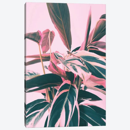 Pink Kalathea I Canvas Print #CTI156} by Emanuela Carratoni Canvas Artwork