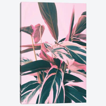 Pink Kalathea I 3-Piece Canvas #CTI156} by Emanuela Carratoni Canvas Artwork