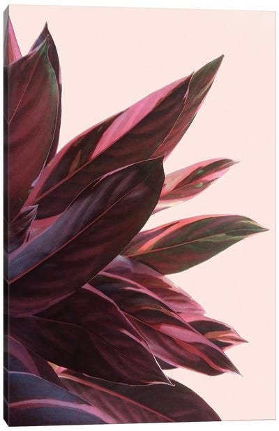 Pink Kalathea II by Emanuela Carratoni Canvas Art Print